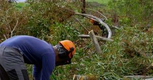 Lumberjacks ciie gałąź w lesie 4k zbiory
