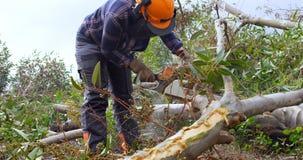 Lumberjacks ciie gałąź w lesie 4k zbiory wideo