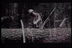 Lumberjacks ciie w dół drzewa w lesie zdjęcie wideo