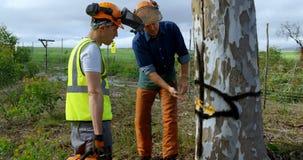Lumberjacks dyskutuje o tnącym drzewie 4k zbiory wideo