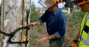 Lumberjacks egzamininuje drzewnego bagażnika przed ciąć zbiory