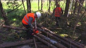 Lumberjacks near logs. In summer day stock footage