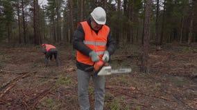 Lumberjacks pracuje w lesie zdjęcie wideo