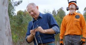 Lumberjacks pracuje w lesie 4k zbiory wideo