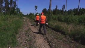 Lumberjacks sprawdza uszkadzającego drzewa zdjęcie wideo