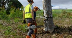 Lumberjacks stoi blisko ocenionego drzewa 4k zbiory wideo