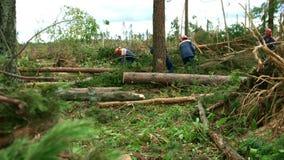 Lumberjacks w ochronnych hełmach zobaczyli szalunków drzewa w lesie z piłami łańcuchowymi zbiory wideo