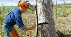 Lumberjacks zaznacza na drzewie z kiścią 4k zbiory wideo