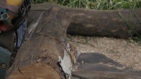 Lumberman que usa a serra de cadeia que vê a madeira seca que encontra-se na terra Movimento lento filme