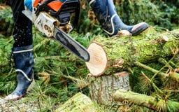 Lumberman with chainsaw cutting wood. Lumberman with worn chainsaw cutting wood stock photo