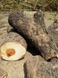 Lumbers куча Стоковые Фотографии RF