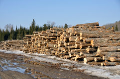 Lumbers. Stacked in the yard waiting for shippment Stock Image