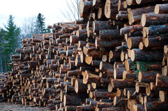 Lumberyard Royalty Free Stock Image