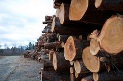 Lumberyard Royaltyfri Fotografi