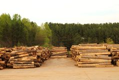 Lumberyard with stacks of logs Stock Images