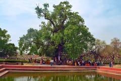 Lumbini, Nepal - birthplace of Buddha Siddhartha Gautama. Parying under Bodhi tree a place of Buddha enlightenment 4 May 2017 stock photo