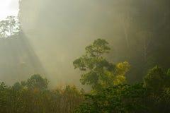 lumière à l'arbre Photo libre de droits