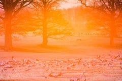 Lumière arrière au champ avec des grues Image stock
