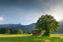 Lumière arrière du soleil avec l'arbre de tilleul Photographie stock libre de droits
