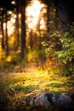 Lumière artistique dans la forêt Photographie stock