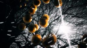 Lumière au delà de l'arbre images libres de droits