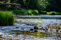lumière beautyful de matin au-dessus de rivière de forêt Photos libres de droits