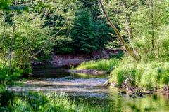 lumière beautyful de matin au-dessus de rivière de forêt Images libres de droits