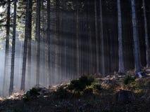 Lumière brillant par la brume Image stock