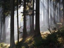 Lumière brillant par la brume Photos libres de droits