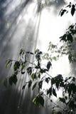 Lumière brumeuse Photo libre de droits