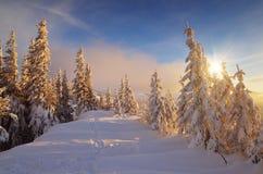 Lumière chaude du soleil sur la neige froide Images stock