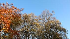 Lumière colorée de ciel et de matin d'Autumn Leaves With Clear Blue photo stock