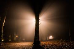 Lumière comme ailes Images libres de droits
