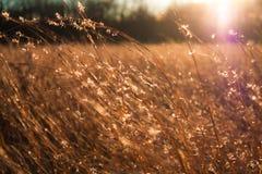Lumière d'or Photo libre de droits