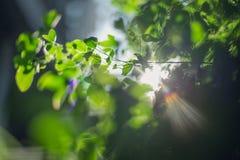 Lumière d'arbre Photographie stock