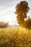 Lumière d'or au pré automnal avec le grand arbre Photo libre de droits