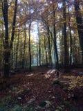Lumière d'automne dans les bois Photos stock