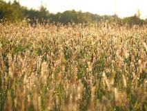 Lumière d'or de nature Photos libres de droits