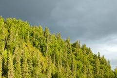 Lumière d'or de soirée illuminant une forêt photographie stock libre de droits