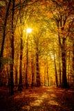 Lumière d'octobre d'or dans la forêt Photo stock