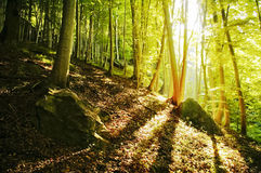 Lumière dans la forêt Photos libres de droits