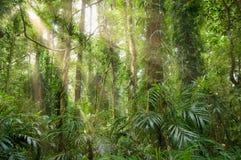 Lumière dans la forêt humide Images libres de droits