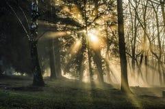 Lumière dans les arbres Images stock