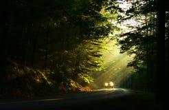Lumière dans les bois Photographie stock