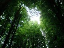 Lumière dans les buissons photos stock