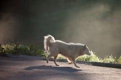 Lumière de chien Image stock