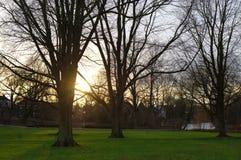 Lumière de coucher du soleil par les arbres en parc Photographie stock libre de droits