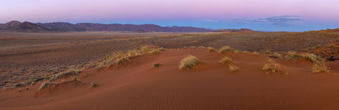 Lumière de début de la matinée dans le Kalahari Images libres de droits