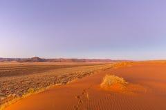 Lumière de début de la matinée sur la dune Photo libre de droits