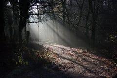 lumière de forêt Photo stock